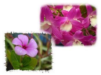 2009.05.12花.jpg